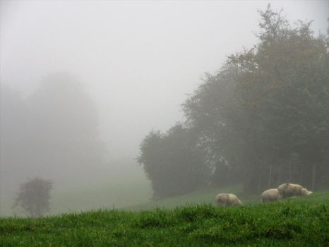 Mist And Sheep by buttercupminiatures