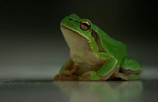 Frog by qrpw
