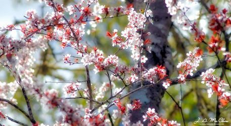 Cherry Blossom II by CanYouSeeTheRealMe