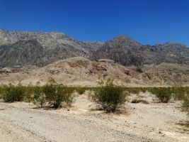 Life in Death Valley by AthenaIce