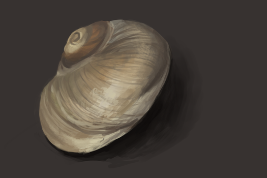 Shell by Polariche