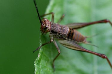 Cricket Photo 7 by blookz