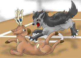 Gym battle: Mightyena-Stantler