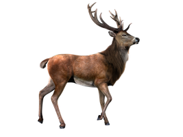 Deer PNG Stock 2 (2-3) by Gilgamesh-Art