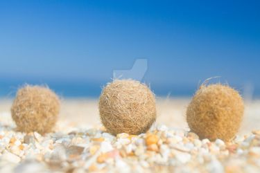 Seagrass Balls by Spanishalex
