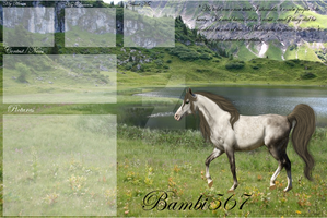 My Layout for Howrse by Bambi567