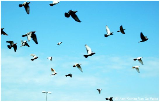 . birds . by A-KPhotography