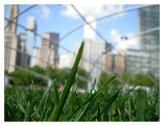 Urban Grass by rexem