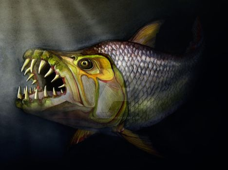 Goliath Tigerfish by bigredsharks
