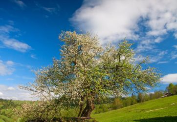 Spring from Bukovina by lica20