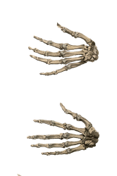 Hands 3 PNG by chaseandlinda
