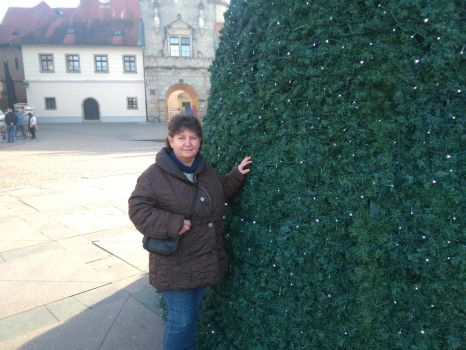 My Son's Mother to Christmas tree by josipnemethzg1