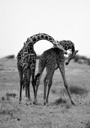 Necking by lmojtahedi