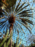 Palm in The Domes by Saxophrenic25
