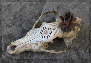 Carved Coyote Skull Planter by ToothlessEgo