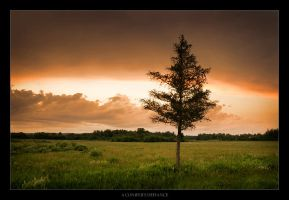A Conifer's Defiance by tfavretto