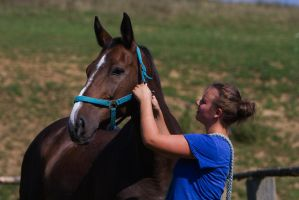 Putting on a Halter by LuDa-Stock