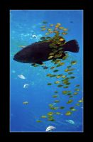 Swimming with the Fishes by Mashuto