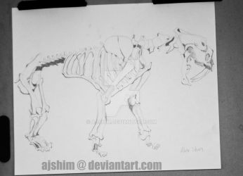 Saber Tooth Tiger Skeleton Drawing by ajshim
