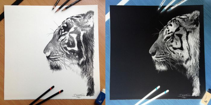 Inverted Tiger Pencil Drawing by AtomiccircuS