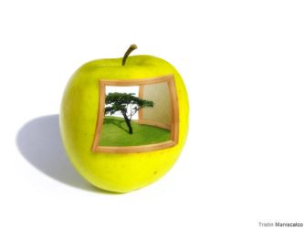 Apple Tree by ExoSoldier22