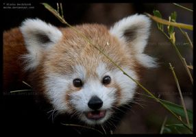 little mozilla by morho