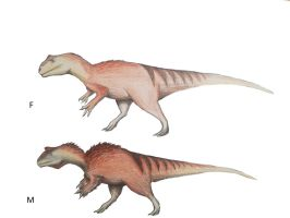 Allosaurus fragilis potential sexual dimorphism by Qbliviens