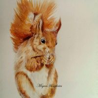 Red Squirrel Painting by stardust12345