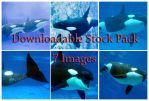Shamu Downloadable Stock Pack by Della-Stock