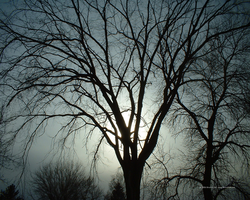 Tree in Silhouette by Norski