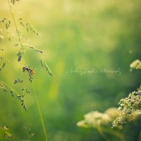 A Bug's Life by StopScreamGraphy