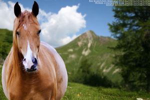 Arabian Horse Picture by kdaigler