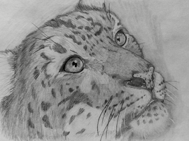 Snow Leopard by Wild-As-Wolves