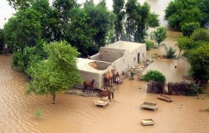 Animals in Flood by zamir