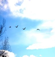 birds on the wing 2 by Pendragon-007