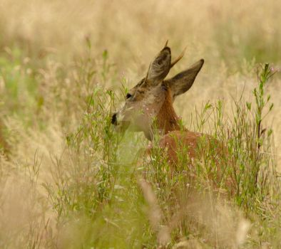 Stag Lee, The Yearling 2 by SaraBimboSlut