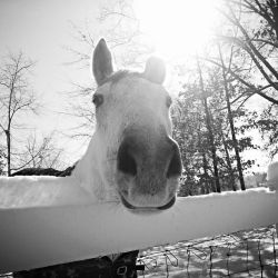 Snow Horse by agporter84