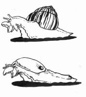 beak-snail and slug by Kampfkewob