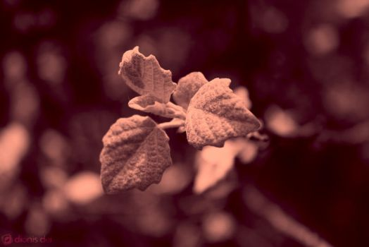 Leafs of stone by DionisDei
