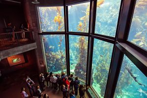 Kelp forest at the Monterey Bay Aquarium 02 by NoirArt