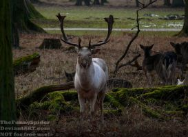 White Stag - Germany 2017 by TheFunnySpider