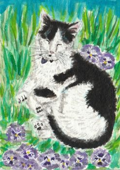 Sleeping black and white cat  acrylic painting by tulipteardrops