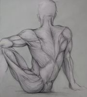 back anatomy - drawing by ceruleanvii