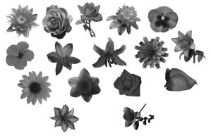 Brushes - Flowers - Various by Immrgy