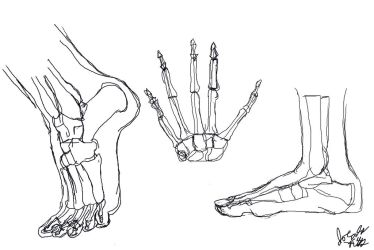Anatomy Studies hand and feet by joycie24