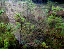 Web by KariLiimatainen