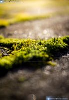 Moss by HackingDutchman