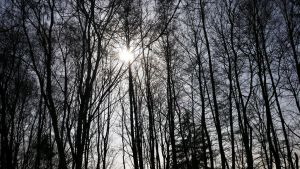 forest in the sun 2 by Shalesa