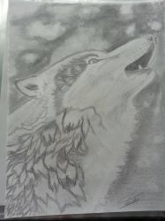 wolf again :-) by WhiteWolf737
