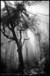 Forest in the clouds by Dominion-Photography
